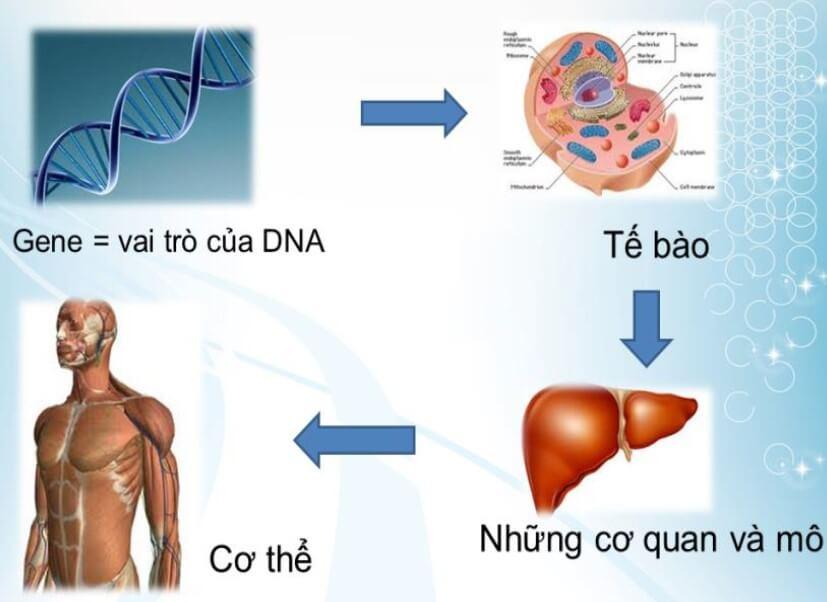 gene và adn (1)